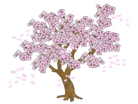 Cherry tree dancing in petals
