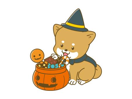 Poach Shiba _ Halloween _ 01