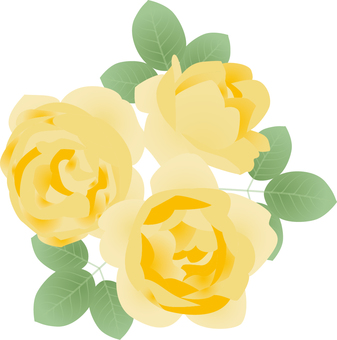 Cut_Rose 6