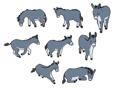 8 types of donkeys
