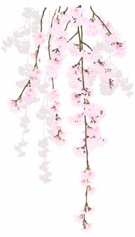 死了的棕色櫻桃樹