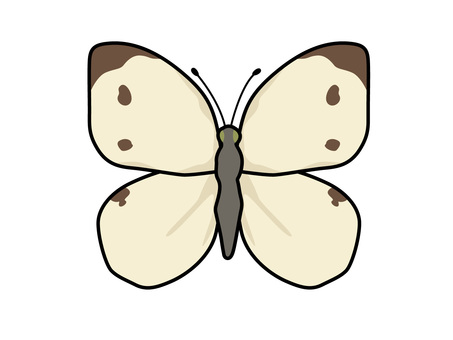 Animal _ Bug _ White butterfly _ with line