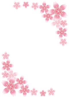 Sakura Sakura 21