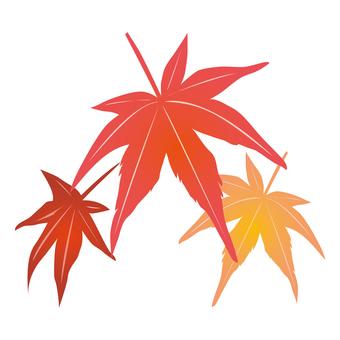 紅葉(楓葉)5