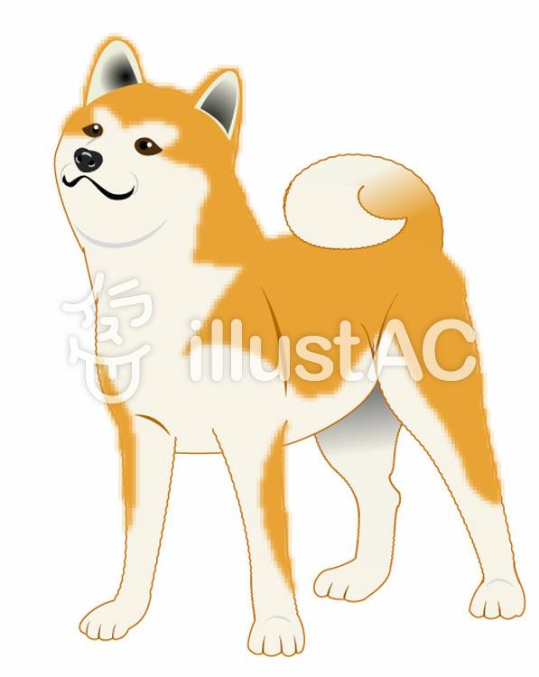上を向く柴犬のイラストのイラスト
