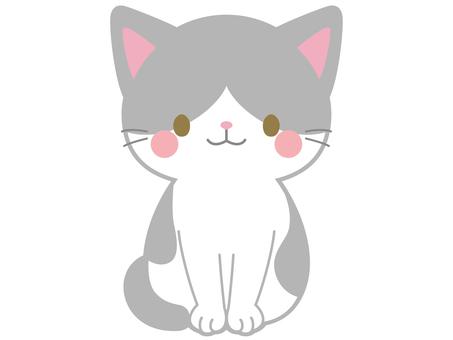 Gray white cat