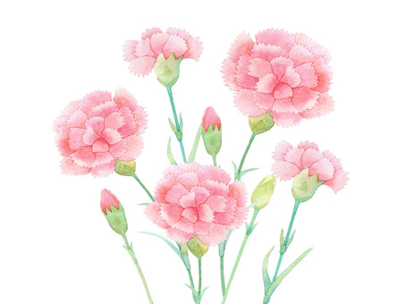 Carnation 01 ★ 0457-F