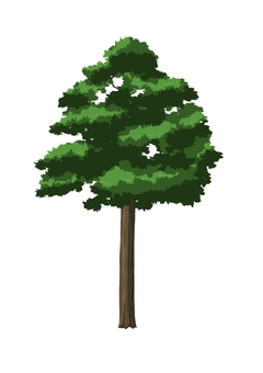 Tree A