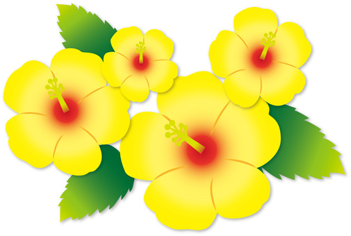 Hibiscus (yellow)