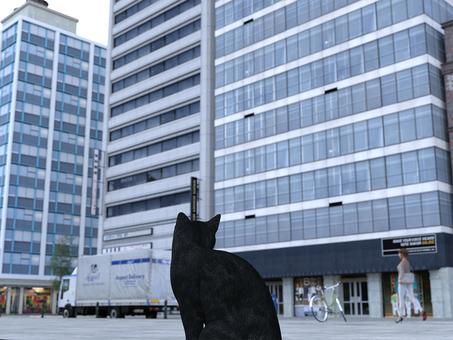 Cat looks at the flow of the city Kuroneko