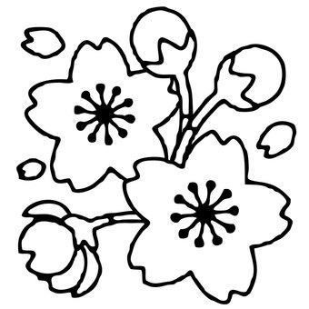 【主線 春】 桜 素材0007