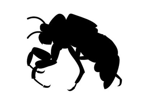 Silhouette of cicadas larva