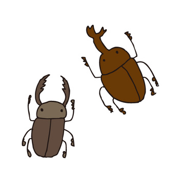 Beetles, stag beetles