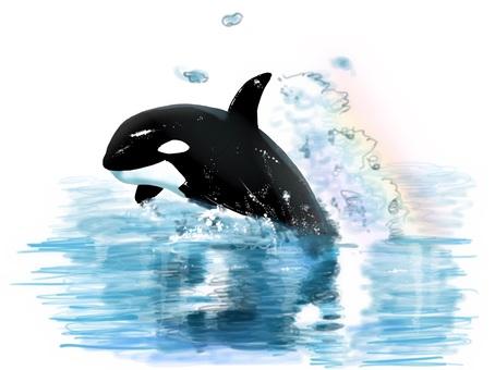 Orca jump