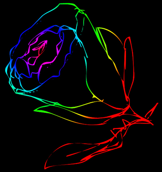 Rainbow rose 2