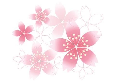 Sakura no Hana 11