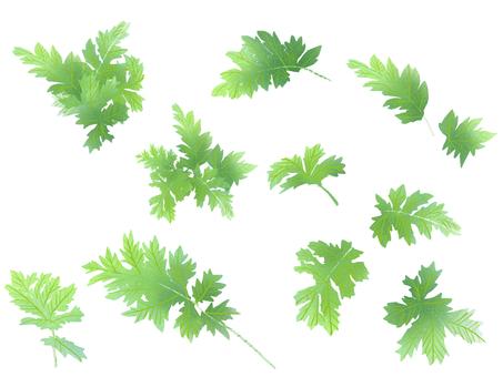 葉片葉材料