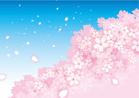 Sakura 50