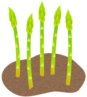 Asparagus growing from the soil