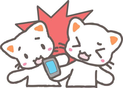 Walking smartphone attention (cat)