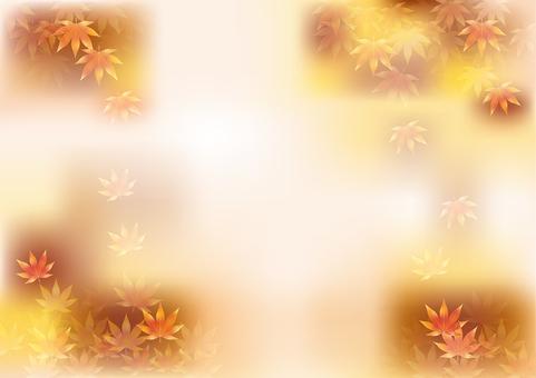 Autumn leaves 348
