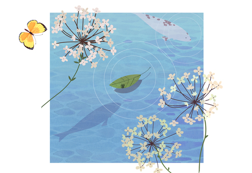 Hydrangea and carp