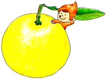 Citrus: Japanese summer