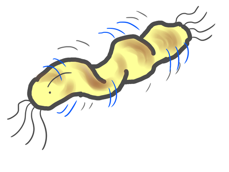 Twisting Helicobacter pylori