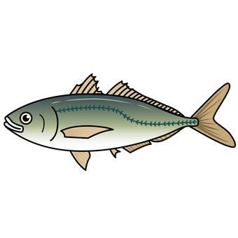 Fish illustration-horse mackerel