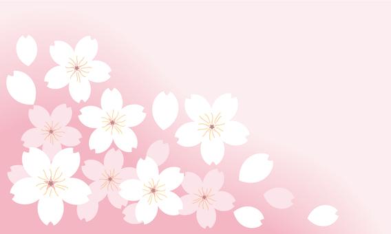 Sakura 04