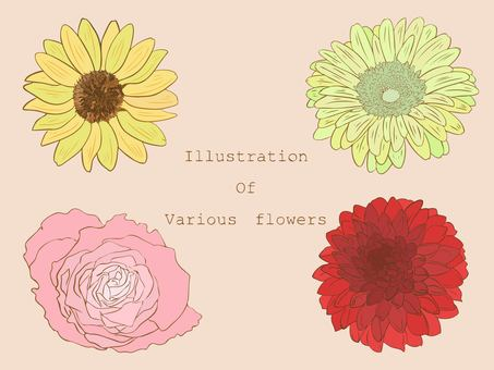 Illustration of various flowers
