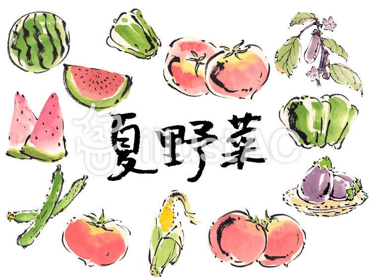 夏野菜手描き素材イラスト No 480871無料イラストなら