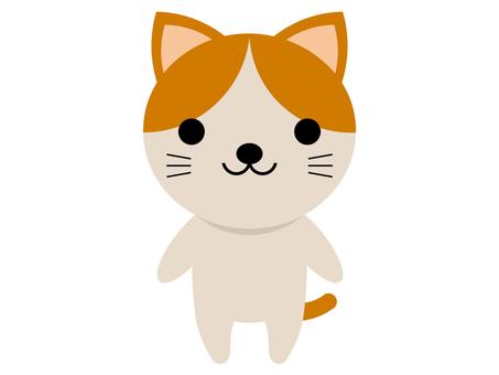 동물 고양이 고양이 서 포즈