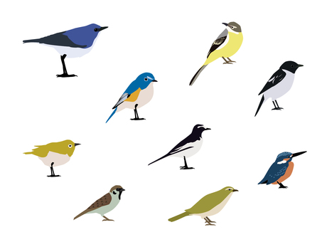 Wild bird illustration set