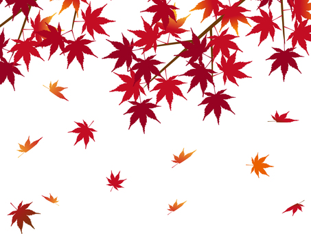 Japanese peace Material Autumn leaves Maple leaves