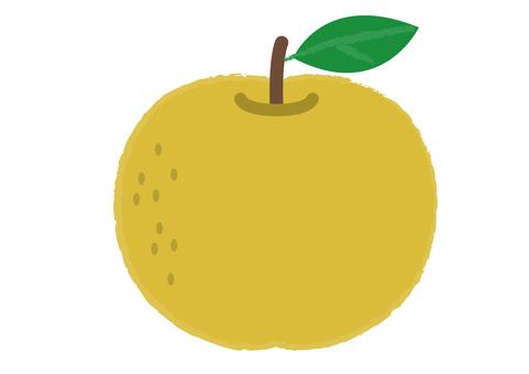 Pear_ 배 1