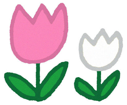 Tulip (pink and tore)