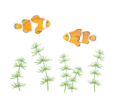 Clownfish and aquatic plants