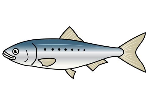 Fish illustration-sardines