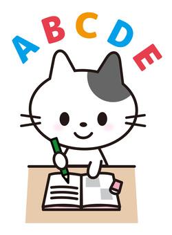 Cat _ study _ English