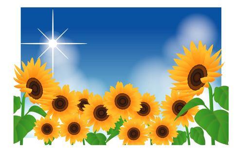 Sunflower group / type f / uta