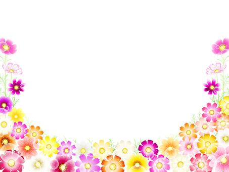秋天·波斯菊背景·花田10