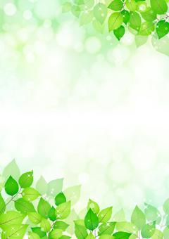 Fresh green 273