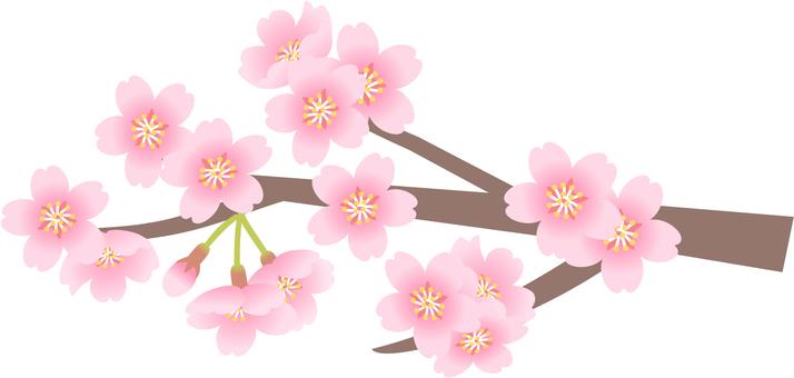 벚꽃 12