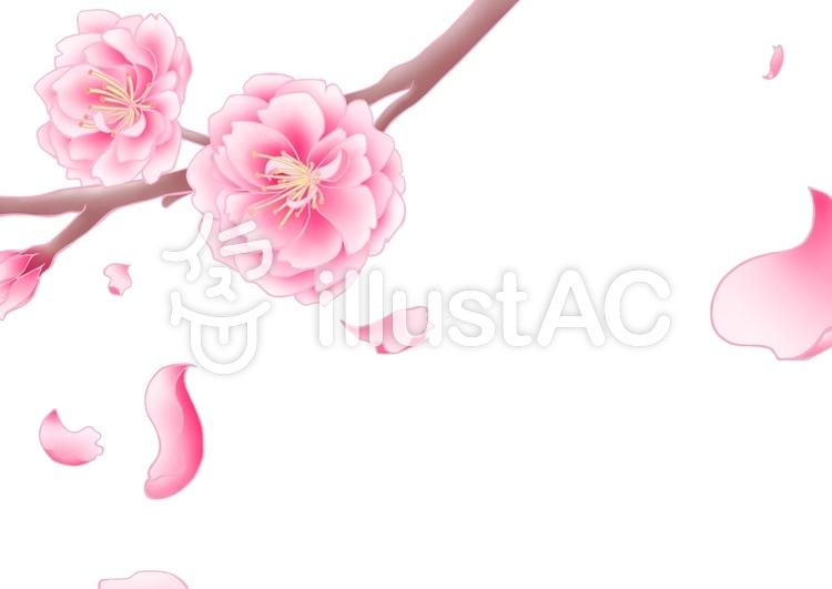 桃の花イラスト No 716968無料イラストならイラストac