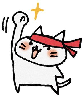 Cheer cat