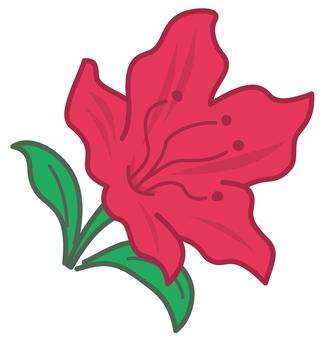 Azalea (red)