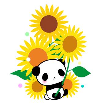 팬더와 해바라기의 일러스트
