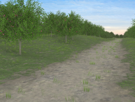 path (fruit tree)