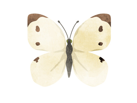 Animals _ Insects _ White butterfly _ Watercolor